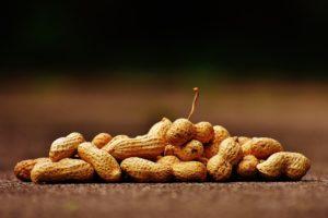 cara menanam kacang