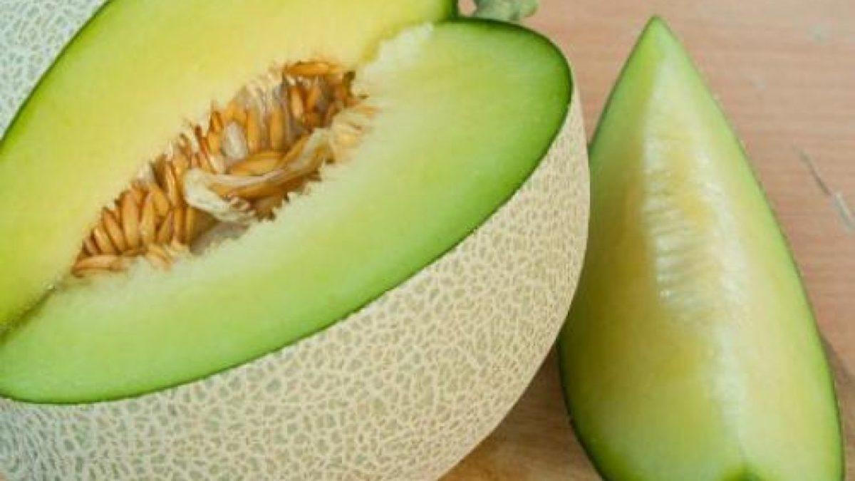 Cara Merawat Melon dengan Baik