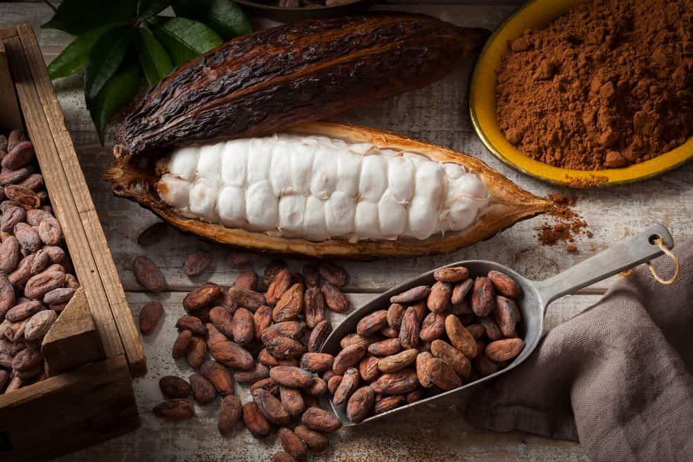 manfaat dari coklat