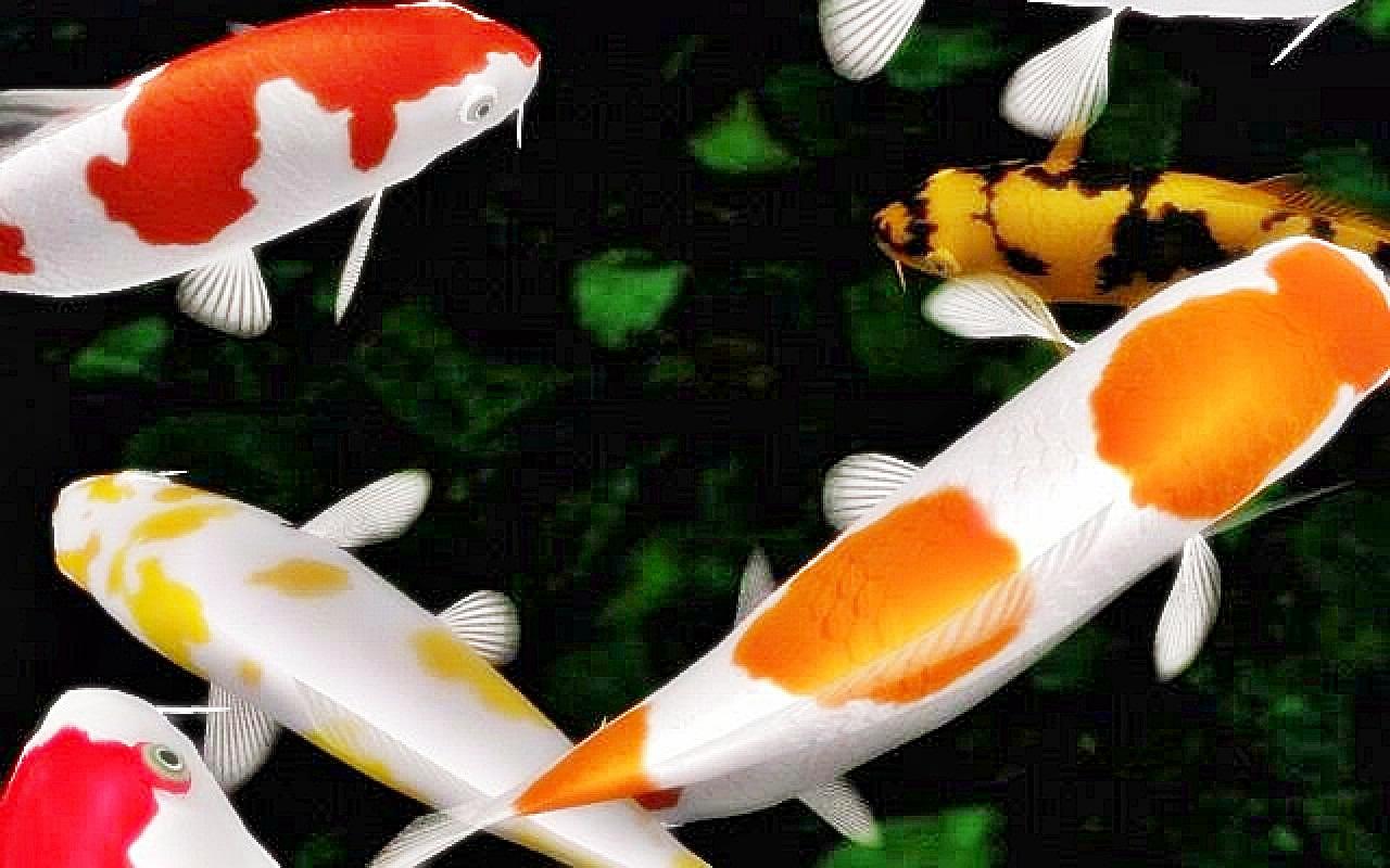 Ternak Ikan Paling Cepat Panen