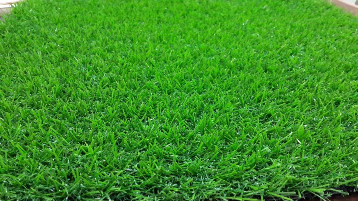 Jenis Jenis Rumput Hias Yang Bagus
