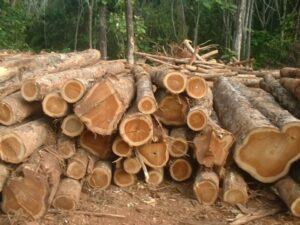macam macam kayu jati - kayu jati